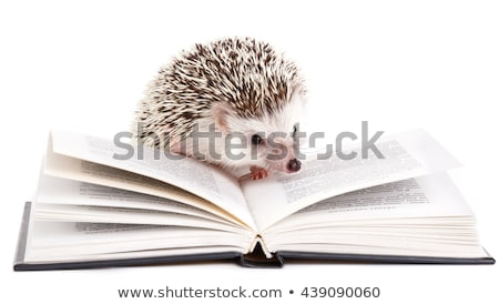 Hedgehog with book Stock photo © clairev