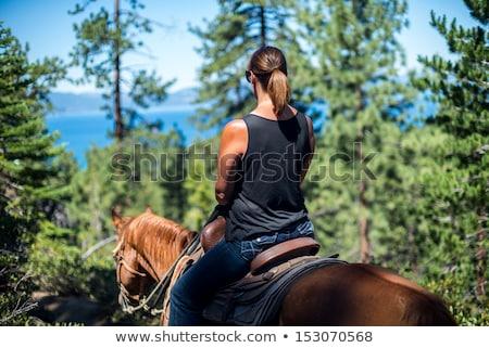 equestrian on horseback riding through water Stock photo © phbcz