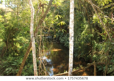 Exuberant vegetation and waterfalls Stock photo © danielbarquero