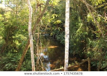 Exuberant vegetation and waterfalls Stock photo © danielbarquero