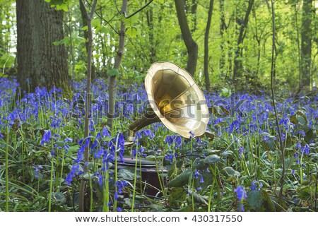 Gramofone animais floresta ouvir música madeira natureza Foto stock © nizhava1956