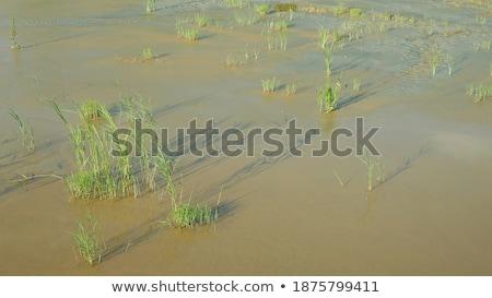 rachado · secas · lama · textura · deserto · laranja - foto stock © tashatuvango