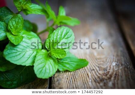 新鮮な ミント 葉 素朴な 木製 写真 ストックフォト © feelphotoart