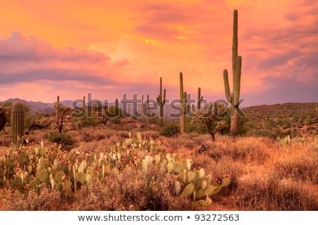 Cactus canyon Arizona natuur landschap Stockfoto © tang90246