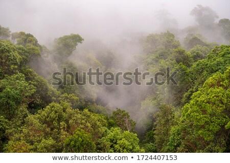 Misty giungla tropicali foresta prospettiva Foto d'archivio © smithore