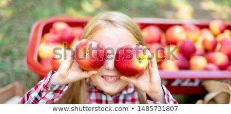 少女 · リンゴ園 · 漫画 · スタイル · リンゴ - ストックフォト © x7vector