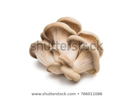 Osztriga gombák izolált friss organikus fehér Stock fotó © Klinker