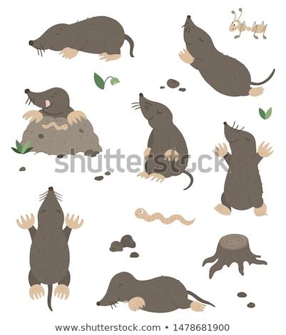 Child mole Stock photo © carbouval