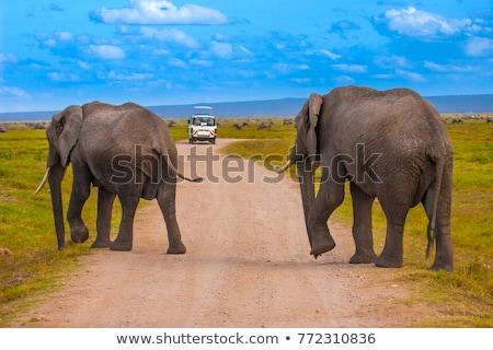 kaland · Kenya · park · út · szavanna · csodálatos - stock fotó © kasto