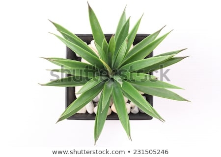 A top view of a plant Stock photo © bluering