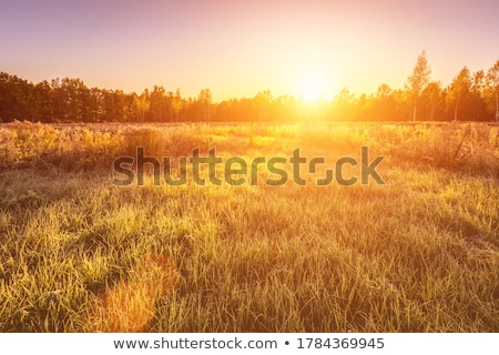 Autumn background with grass and forest covered with frost in the early frosts Stock photo © AlisLuch