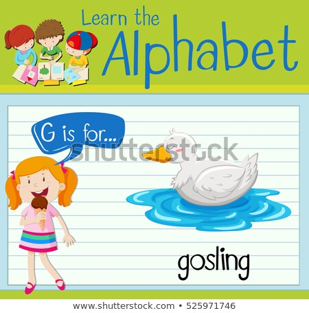 Flashcard letter G is for gosling Stock photo © bluering
