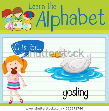 flashcard letter g is for gosling stock photo © bluering