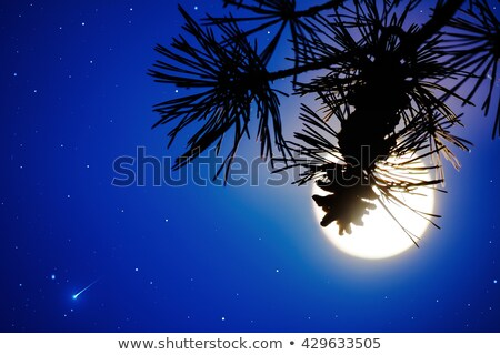Defocused Pine Branch And Full Moon On The Night Sky Photo stock © TasiPas