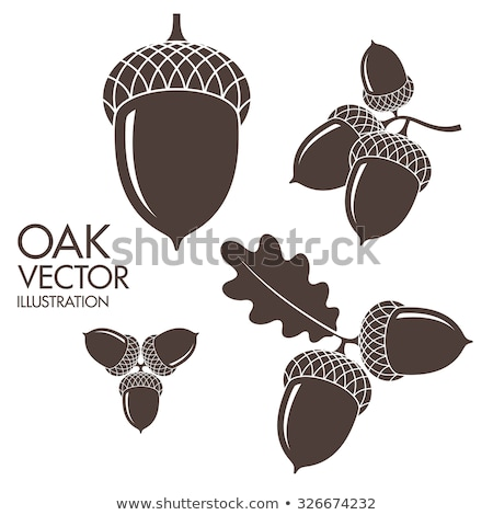 Flat acorn icon isolated on white background. Vector Stock photo © JeksonGraphics