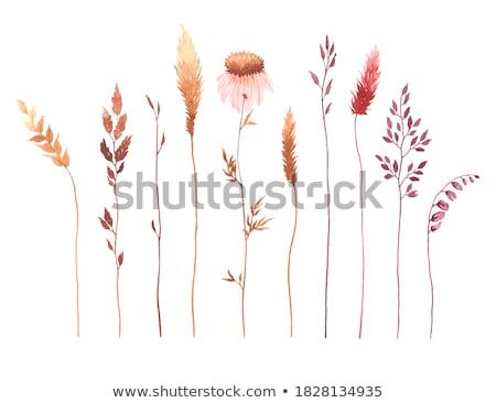 Roxo flores da primavera secar grama primeiro flores Foto stock © Kotenko