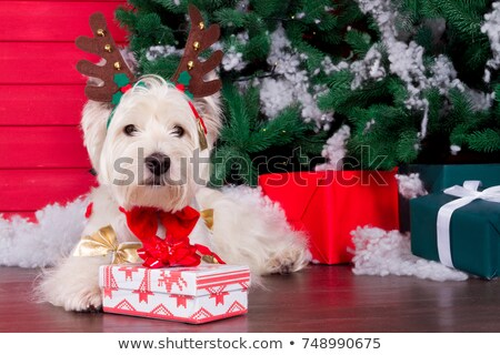 postcard puppy of christmas tree branches stock photo © olena