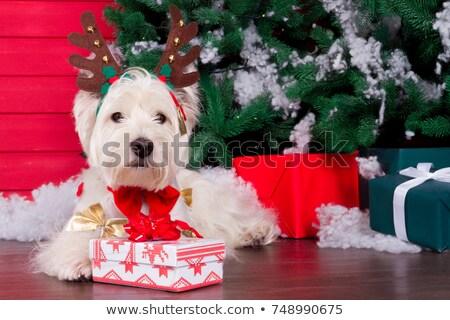 Kartpostal köpek yavrusu noel ağacı yılbaşı simge Stok fotoğraf © Olena