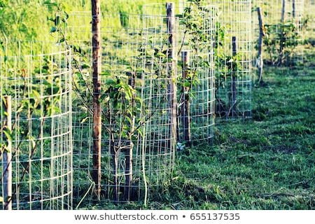 Metal guard mesh protection for animal damaged tree bark Stock photo © Virgin
