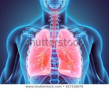 cancer in human lungs stock photo © bluering
