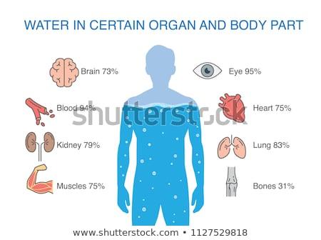 воды · икона · почка · медицинской · тело · фон - Сток-фото © olena