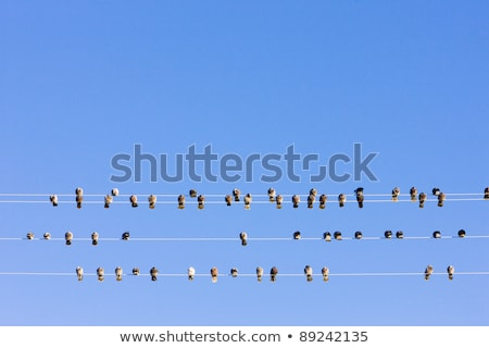 birds sitting on wire, Nevada, USA Stock photo © phbcz