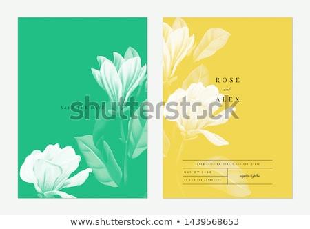 Stockfoto: Huwelijksceremonie · kleur · banner · geïsoleerd · witte · bruid