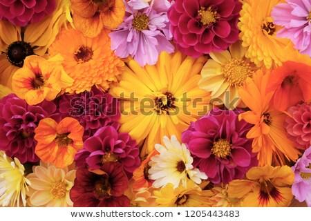 Nagy citromsárga virág vegyes mély Stock fotó © sarahdoow