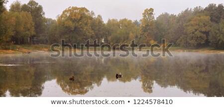 jesienią · krajobraz · przeciwmgielne · drzewo · ptaków · rano - zdjęcia stock © tanach