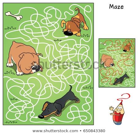Cartoon doolhof spel dog bone illustratie onderwijs Stockfoto © izakowski