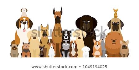 sevimli · Evcil · ayarlamak · karikatür · örnek · hayvanlar - stok fotoğraf © izakowski
