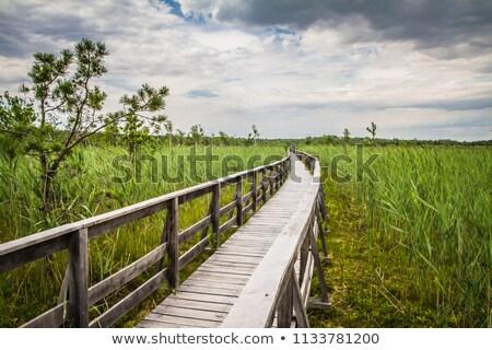 парка Польша трава природы синий путешествия Сток-фото © benkrut