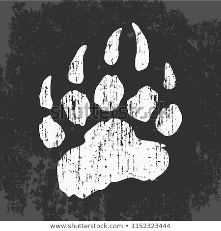 black and white bear paw with claws stock photo © hittoon