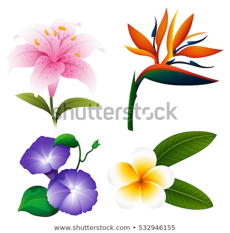 Different kinds of tropical flowers Stock photo © colematt
