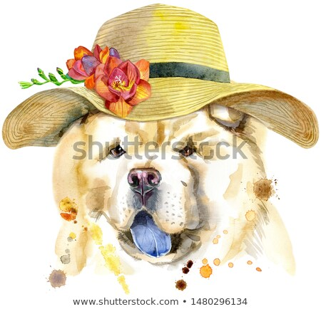 Watercolor portrait of chow-chow dog with a wide-brimmed summer hat Stock photo © Natalia_1947