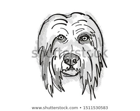 Bearded Collie Dog Breed Cartoon Retro Drawing Stock photo © patrimonio