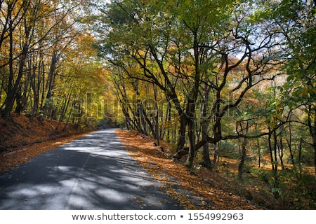 Asombroso vista colorido otono forestales asfalto Foto stock © galitskaya