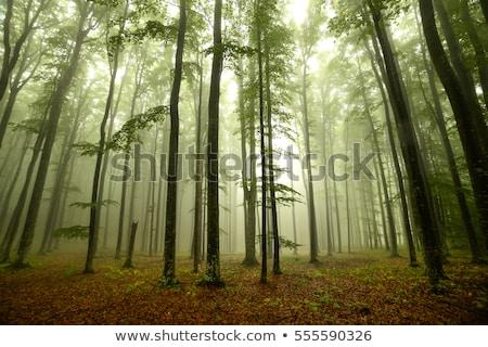 тайна лесу пейзаж удивительный деревья Сток-фото © Anneleven