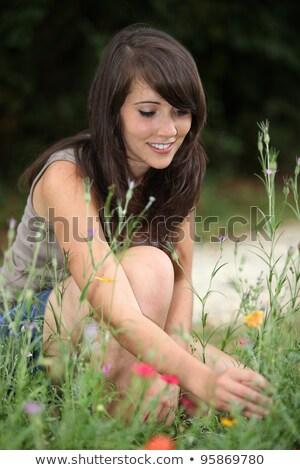 весны · Полевые · цветы · диких · цветов · трава · разнообразие - Сток-фото © photography33