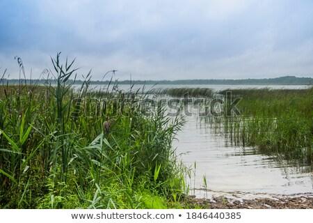 lake rushy stock photo © aliftin