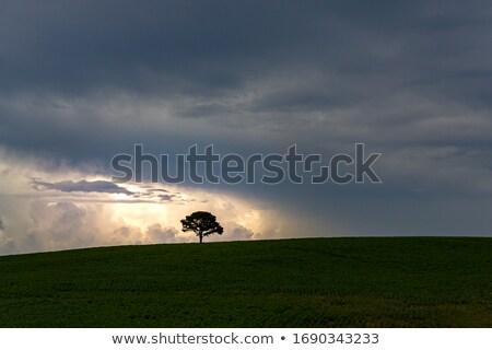 сильный силуэта один дерево холме Blue Sky Сток-фото © bobbigmac