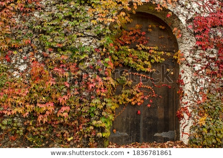 cellar door Stock photo © sirylok