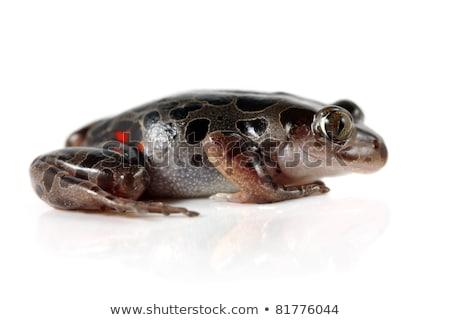カエル · を実行して · 自然 · 緑 · 動物 · 環境 - ストックフォト © macropixel