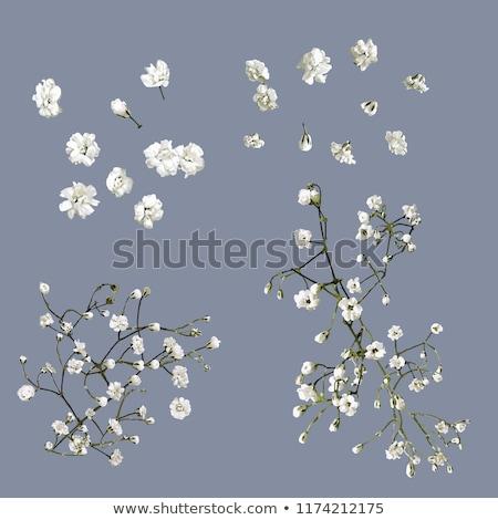 Küçük beyaz çiçek kırmızı Stok fotoğraf © samsem