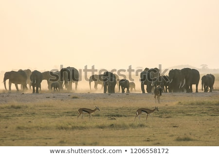 Elephant in the wild life Africa  Stock photo © dagadu