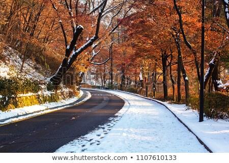 ősz hó első váratlan borító citromsárga Stock fotó © michey
