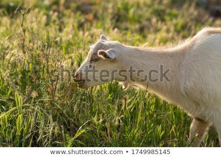 klein · pasgeboren · liefde · melk · drinken · veiligheid - stockfoto © wavebreak_media