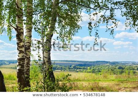 ágak nyírfa tavasz fiatal kék ég erdő Stock fotó © Kotenko