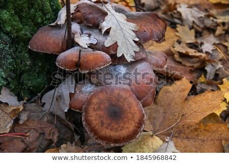 菌 成長 足 ツリー 木の幹 ストックフォト © sarahdoow