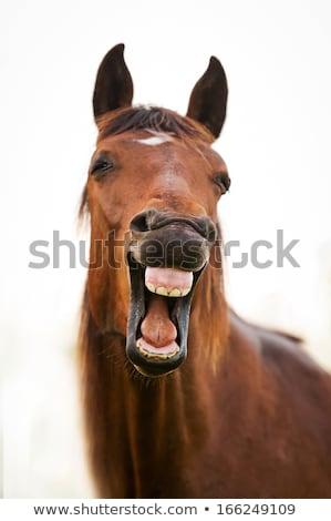 sleepy white horse stock photo © elenarts